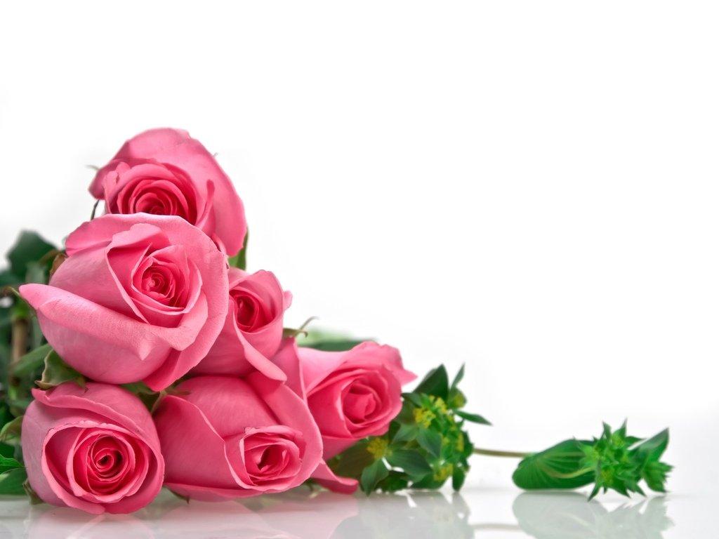 1289226352_flowers.jpg